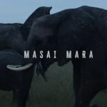Masai Mara - The Safari of a LifeTime!