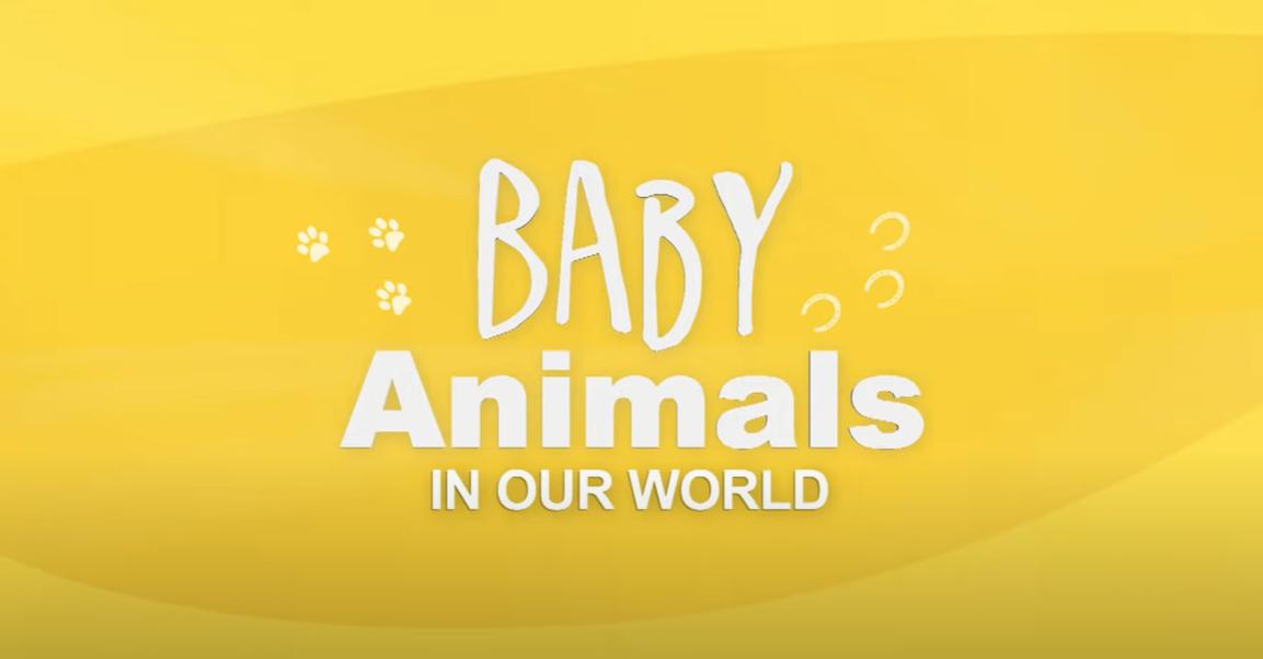 Playful Animal Babies Annoying Their Parents   Cutest Baby Animals   Real Wild